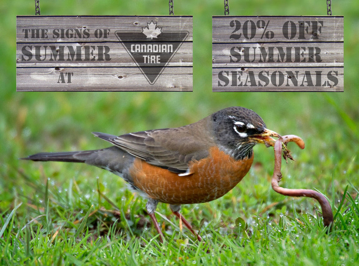 robin catching a worm advertisement