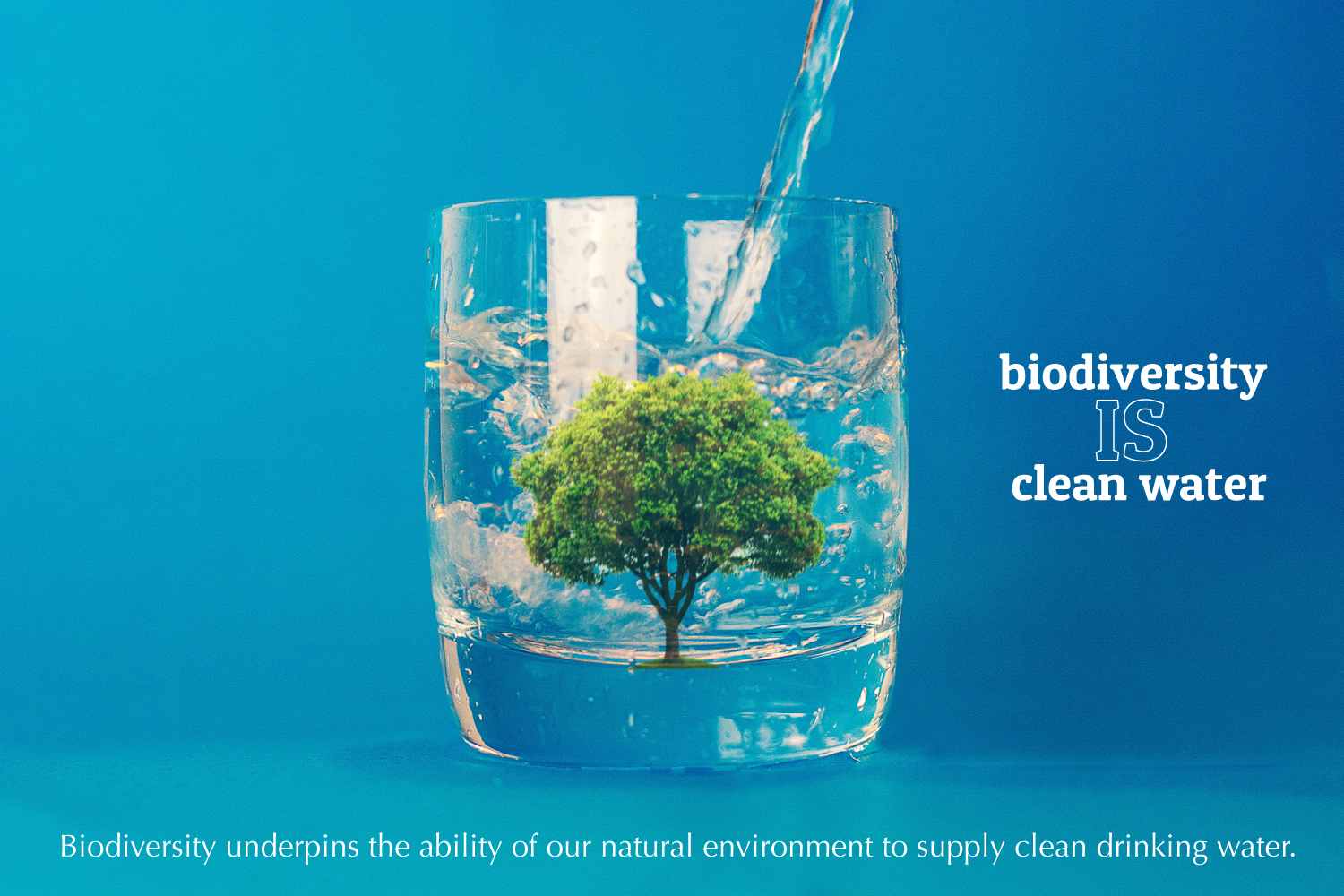 biodiversity is clean water: a tree inside a glass of water