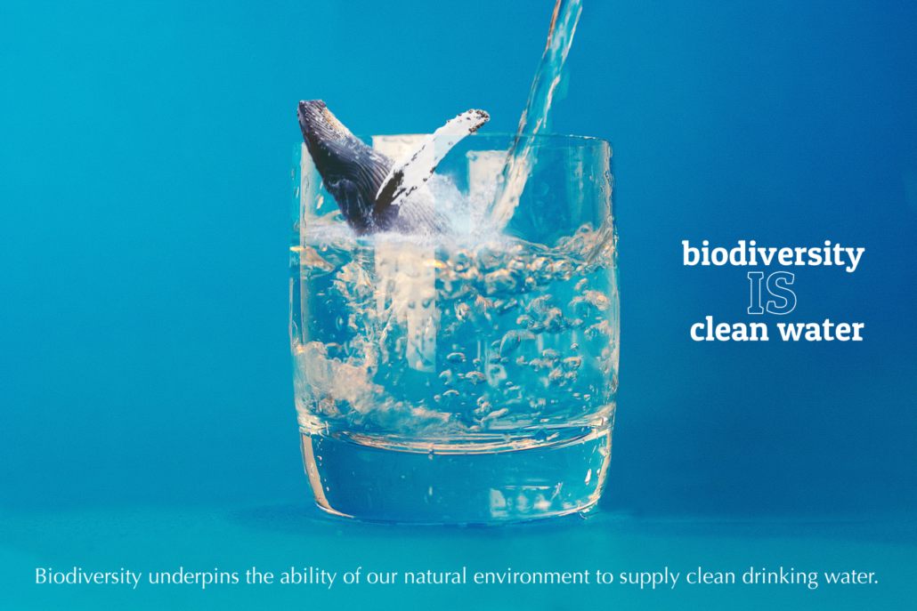 biodiversity is clean water: whale inside a glass of water